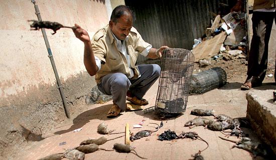 mumbai rat killer - onlybombay.blogspot